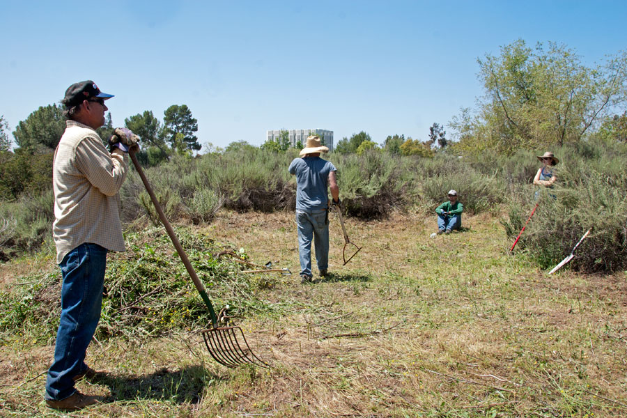 5 May 2012: Four tired volunteers – Tim Cox, Elliott Cox, Lee Krusa, and Cleo Stannard – who've just finished clearing the mound of mustard and thistles. ©Nancy Hamlett