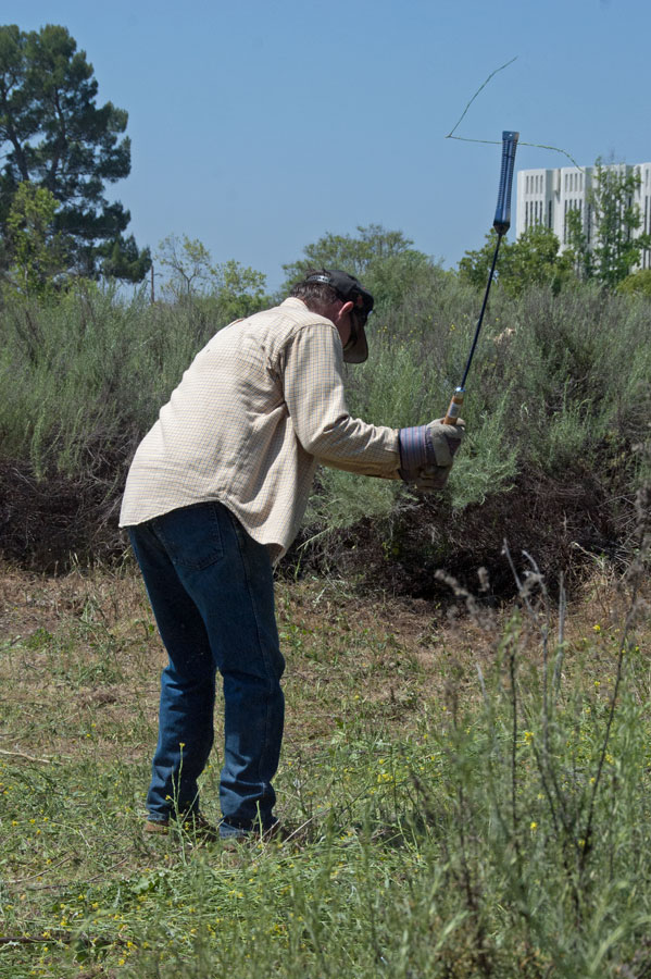 Hand Weed Whip ~ Assaulting the mother lode of italian thistles « news from
