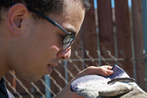 Jacob Thomson inspects a millipede (Hiltonius pulchrus). Nancy Hamlett.