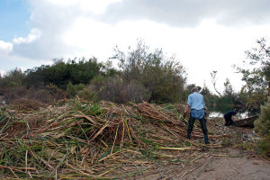Volunteers Mike Tschudi and Tim Cox add the last of the cattails to the giant pile. Nancy Hamlett.