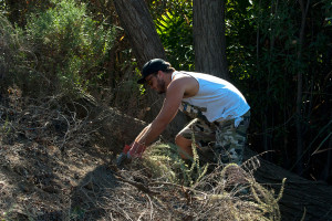 Clearing the 'bee island'.