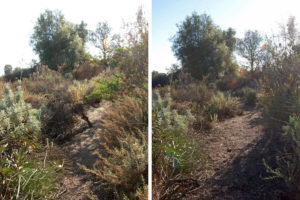 Southeast corner of the trail. Left: Before. Right: After.