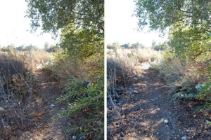 Trail on the east side of the lake. Left: Before. Right: After.