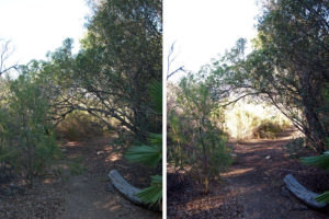 Trail on the west side of the lake. Left: Before. Right: After.