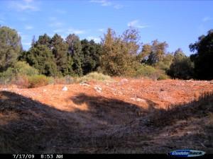 BFS landscape near RSA (Cuddeback NoFlash)