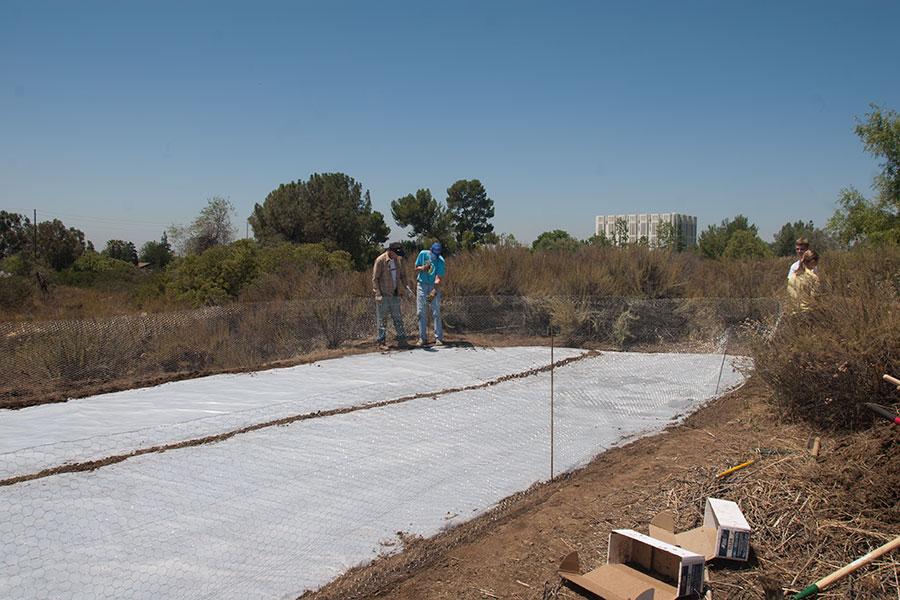 Tim Cox, Prof. Dick Haskell (HMC), Bryan Visser (HMC '13), and Anne Clarke (HMC '13) put in the last support for the fence around the solarization. ©Nancy Hamlett.