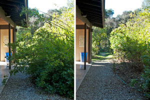 Before and after: The path on the west side of the classroom. Nancy Hamlett.