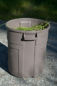 A garbage can full of Brassica tournefortii!  Nancy Hamlett.