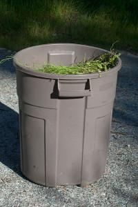 A garbage can full of Brassica tournefortii!  Nancy Hamlett.