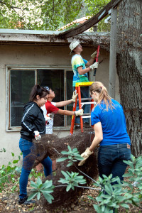 Stacy Guzman (Citrus College) and Anne Clark (HMC '13) cart away the old chicken wire, while Michael Lertvilai (HMC '15) and Tom Andrews cut more wire loose from the supports.  Nancy Hamlett.
