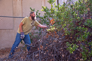 BFS Director Marty Meyer hauls out a dead tree limb. Nancy Hamlett.