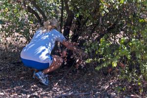 Tess Adams (Pomona '16) saws a low branch off a shrub. Nancy Hamlett.