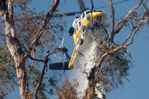 4:53 PM - A Sikorsky S70-A water dropping helicopter, seen through a eucalytus tree, dropping water on the south edge of the BFS. ©Nancy Hamlett.