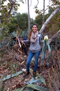 Desiree Lopez (Citrus College) carries out Century Plants.