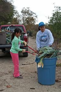 Elena assists Gloria Cangahuala in cutting up Century Plants for disposal.