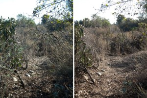 A portion of the lake trail before (left) and after (right) clearing. Nancy Hamlett.