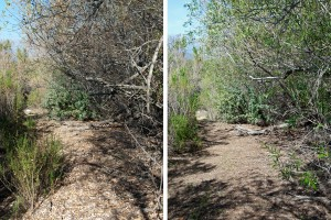 The west portion of the lake trail before (left) and after (right). Nancy Hamlett.