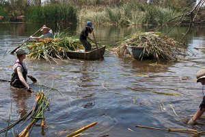 Marcie Gaebler (HMC '17) brings cut cattails to the shore while Prof. Paul Stapp (CSU Fullerton) and Ben Stapp haul away two boatloads of cut cattails. Nancy Hamlett.