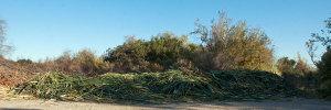 The huge pile of cut cattails. Nancy Hamlett.